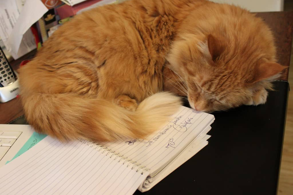 orange cat laying on desk