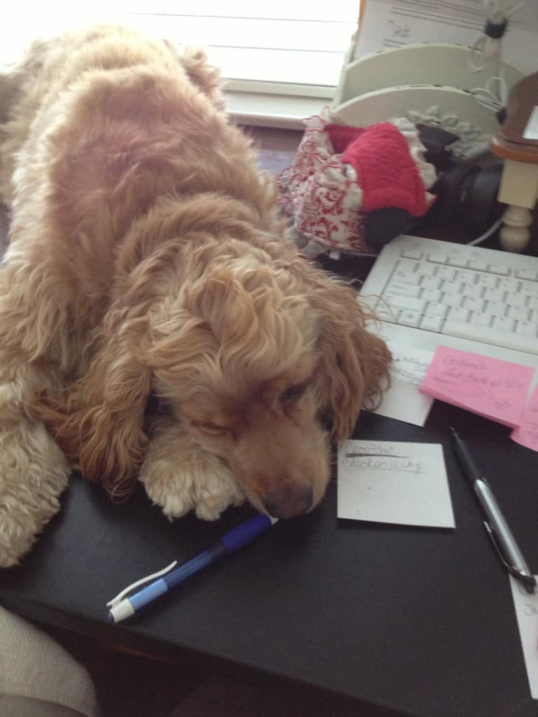 dog laying on desk