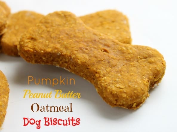 Pumpkin Peanut Butter Oatmeal Dog Biscuit Created By Diane