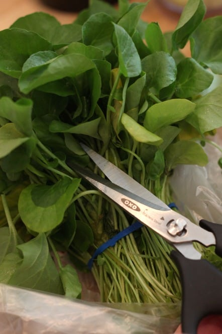 cutting watercress.jpg