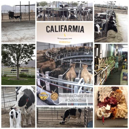 Bootsma Dairy Farm Lakeview Ca #CaDairyTour Real California Milk and Cheese @createdbydiane