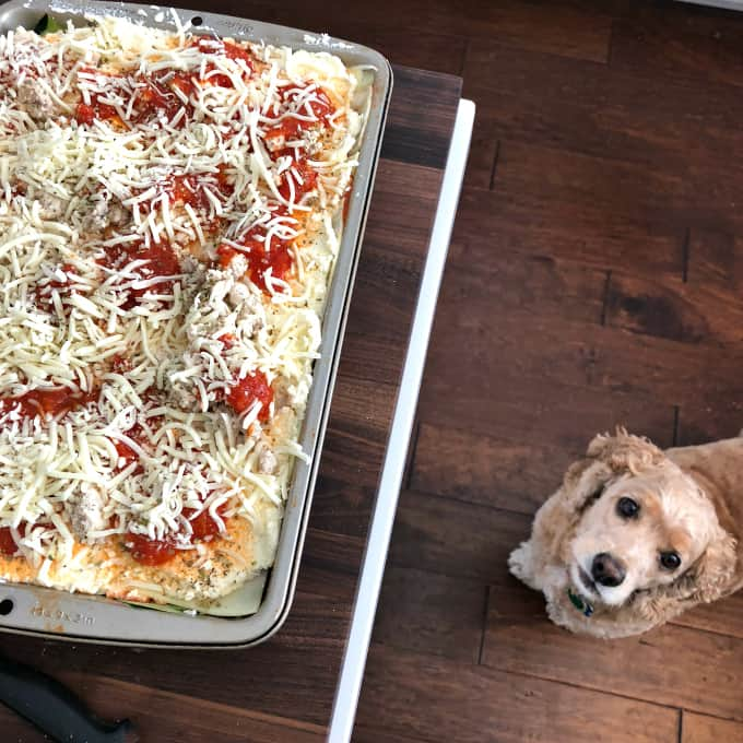 charlie likes lasagna, catch charlie on instagram @sweetcharliedog