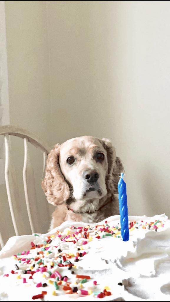 dog with birthday cake www.createdbydiane.com