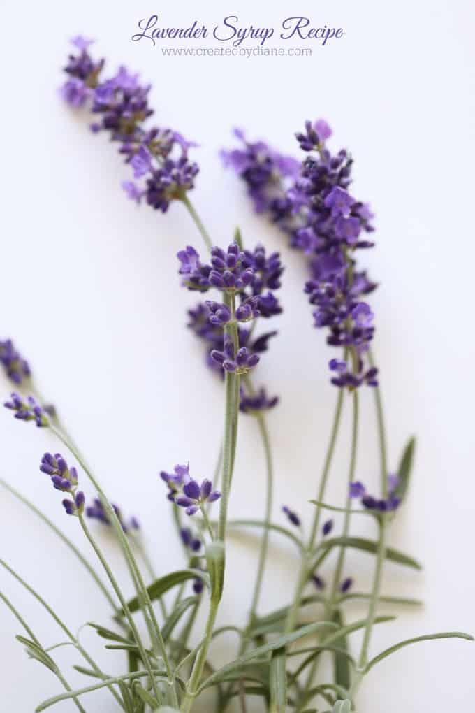 lavender syrup recipe www.createdbydiane.com