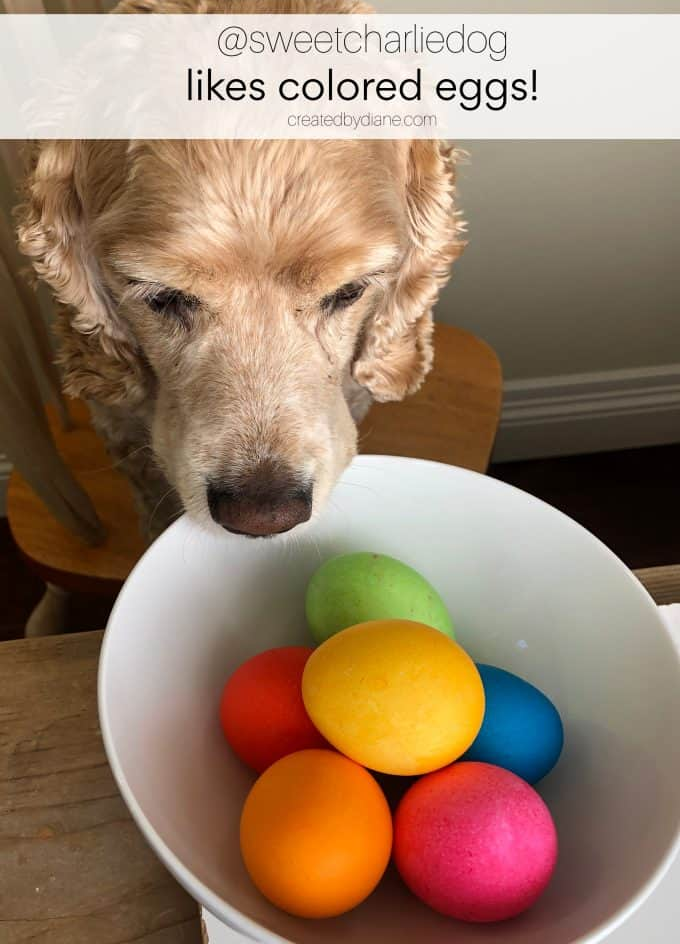 coloring eggs with @sweetcharliedog